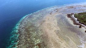 Zu 35 Prozent tot: Folgen der Korallenbleiche am Great Barrier Reef sind verheerend
