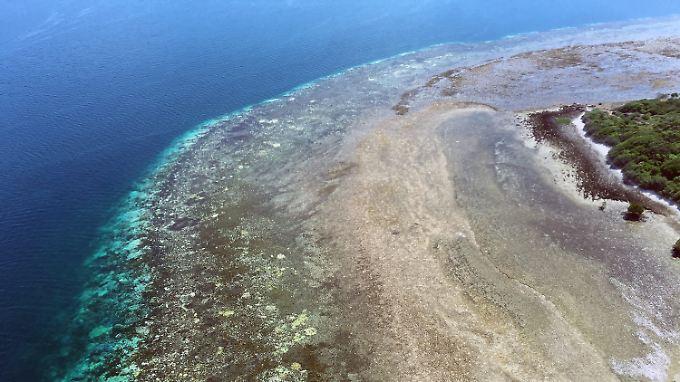 100-Millionen-Dollar-Spende Richard Branson: Folgen der Korallenbleiche am Great Barrier Reef sind verheerend