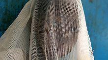 Bio-Waffe im Kampf gegen Malaria: Bakterien machen Erregermücken harmlos