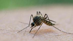 Eine Mücke saugt Blut aus dem Arm eines Mannes. Foto: Patrick Pleul/Illustration