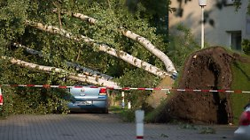 Dutzende Bäume wurden entwurzelt.