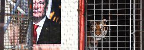 """Kunstaktion mit lebenden Tigern: Berlin will """"Flüchtlinge fressen"""" verbieten"""