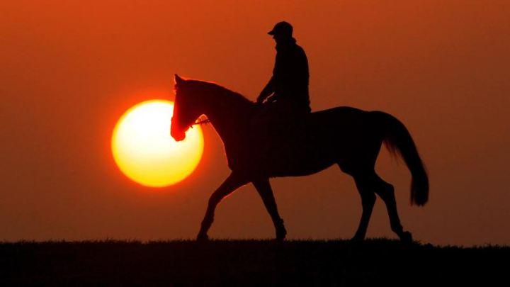 Forscher haben den Gang von Pferden und das Verhalten ihres Körpers genauer untersucht.
