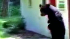 Dunkle Gestalt im Vorgarten: Aufrecht gehender Bär streift durch Gemeinde in New Jersey