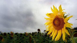 Süddeutschland auf der Sonnenseite: Juli verabschiedet sich wechselhaft