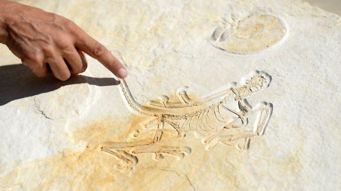 Das Fossil ist das älteste bekannte Exemplar des Urvogels.