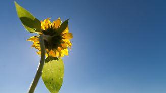 Traumhafter Sonnentag: Sommer zeigt seine ganze Kraft