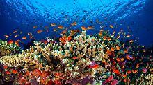 300 Meter breit, 10 Meter tief: Neues Riff am Great Barrier Reef entdeckt