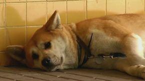 Warten auf kranke Besitzerin: Hündin harrt seit Tagen vor spanischer Klinik aus