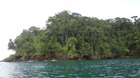 Entlang der Pazifikküste ist der Urwald spektakulär.