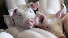 Kannibalismus und qualvolle Tode: Bauern gestehen Misshandlung von Tieren