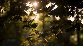 Woche wird wechselhaft und kühler: Herbst vertreibt die letzten Sommertage