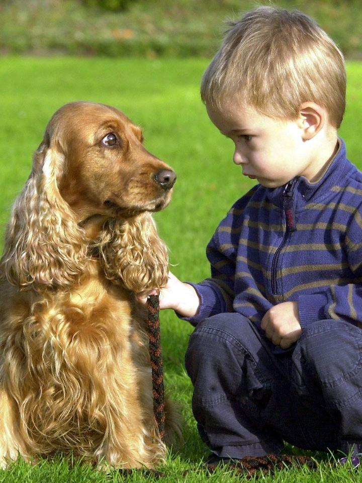 Hund und Mensch verstehen sich manchmal auch ohne Worte.
