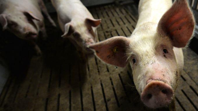 Darüber, worum es der Initiative Tierwohl wirklich geht, gibt es derzeit erhebliche Zweifel.