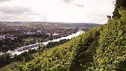 Zwischen Burgen und Rotwein: Eine Reise durchs Spessart-Mainland