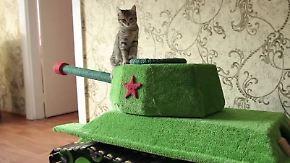 Kaum zu glauben, aber wahr: Russe baut Panzer-Kratzbaum im XL-Format