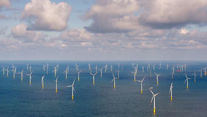 Etwa in den Randgebieten von Windparks könnten die Austern angesiedelt werden.