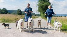 Auf den Hund gekommen: Lässt sich Gassi gehen steuerlich absetzen?