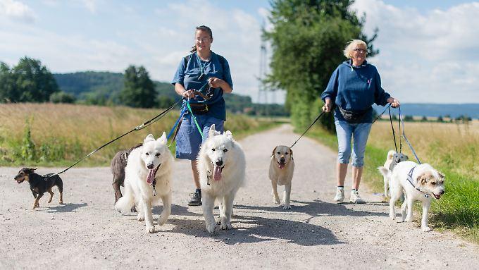 Für die Steuer ist entscheidend,  ob die Leistungen im Zusammenhang mit der Haushaltsführung stehen - dies gilt auch für den Hund.