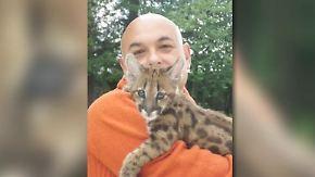 Bürokratie trennt beste Freunde: Franzose kämpft um Puma Shanou