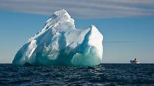 Tierisches Vergnügen im Eis: Die Welt der Antarktis