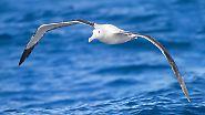 Rekorde zu Wasser, zu Land und in der Luft: Die größten Lebewesen der Welt