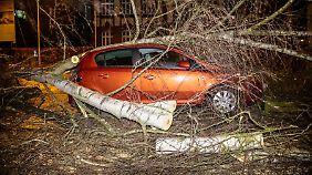 In Wiesbaden stürzte ein Baum auf ein geparktes Auto.