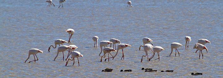 Der WWF schlägt Alarm: Diese Unesco-Naturdenkmäler sind in Gefahr