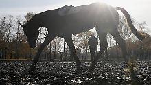 Pferde, Werte und Verbrechen: Die besten Hörbücher für letzte Wintertage