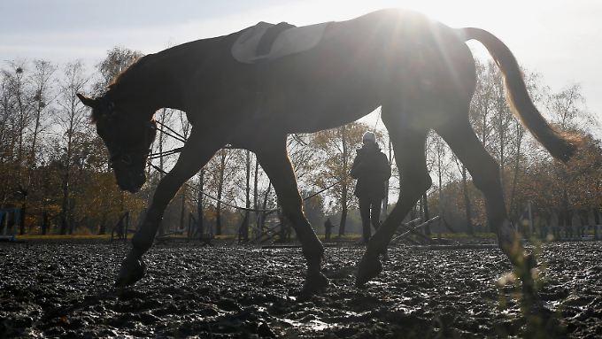 Mit einem Pferd ist das Leben leichter zu bestehen.