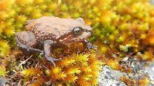 In der Tierwelt berühmt: Sir Attenborough ist jetzt ein Frosch