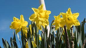 Viel Sonne, wenig Wolken: Der Samstag macht Lust auf Frühling