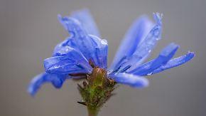 Minusgrade in der Nacht: Frühling hat kleinen Durchhänger
