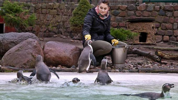 Ja, auch die Arbeit mit Pinguinen kann neue Perspektiven eröffnen.