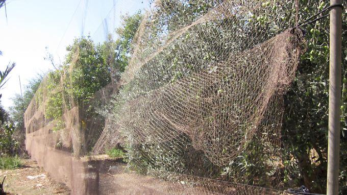 Netze hängen aufZypern, umdamit Vögel zu fangen. Aufder Mittelmeerinsel werden Wildvögel illegalerweise gejagt.