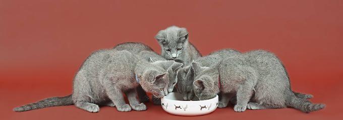 Ja, das macht die Katze froh: Das beste Feuchtfutter kostet 35 Cent
