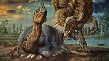 Millionen Jahre alte Eier: Dinosaurier-Baby wäre ein Riese geworden