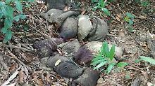 Im Dschungel von Myanmar: von Wilderern abgetrennte Hautteile und Gliedmaßen eines Elefanten.