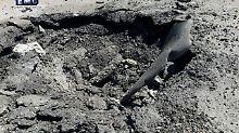 Über 80 Tote bei Giftgas-Angriff: BND hält Assad-Armee offenbar für schuldig