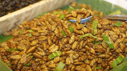 nahrhaft und klimafreundlich insekten die man essen kann n. Black Bedroom Furniture Sets. Home Design Ideas
