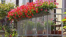 Grenzen für Balkon-Gärtner: Was auf dem Balkon beachtet werden muss