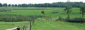 Das Dosenmoor bei Großharrie steht schon seit 1978 unter Naturschutz.