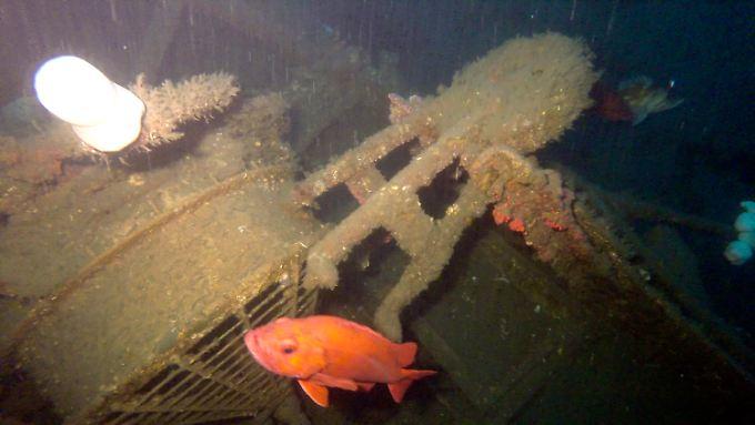 Fische verrieten das Wrack der McCulloch.