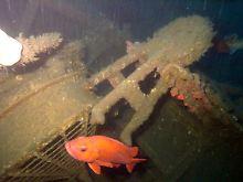 Fundsache, Nr. 1354: Hundert Jahre altes Wrack vor US-Küste