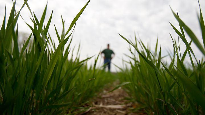 Nachwachsende Milliardengeschäfte: In der Agrarchemie kommt es derzeit weltweit zu Übernahmen und Fusionen.