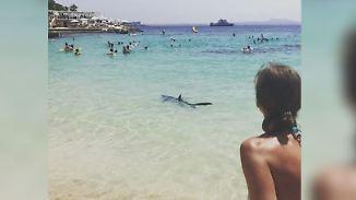 Drei Sichtungen, ein totes Tier: Blauhai schockt Badegäste auf Mallorca