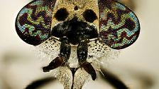 Mücken, Bremsen, Schnaken: Die Plagegeister der Saison