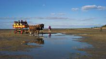Im Pferdewagen durch den Schlick: Wattenmeer lädt jeden auf Entdeckertour ein