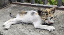 Tierheim statt Eigenheim: Wenn 55 Katzen und 10 Hunde leiden