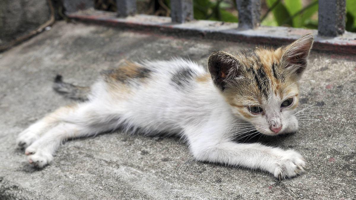 tierheim statt eigenheim wenn 55 katzen und 10 hunde leiden n. Black Bedroom Furniture Sets. Home Design Ideas